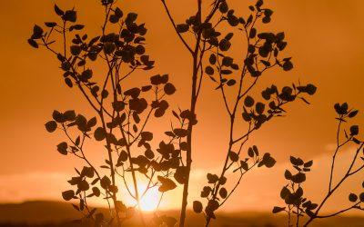 Apsen Sunset