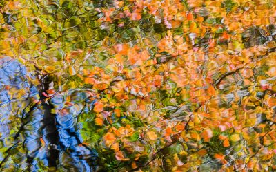 Reflections on Hidden Pond