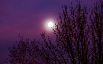 Moon Songs