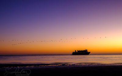 National Geographic Sea Lion at Sunrise