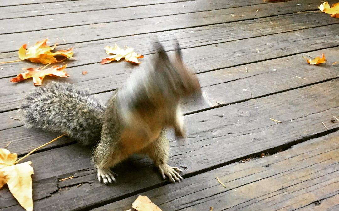 Lurching Squirrel