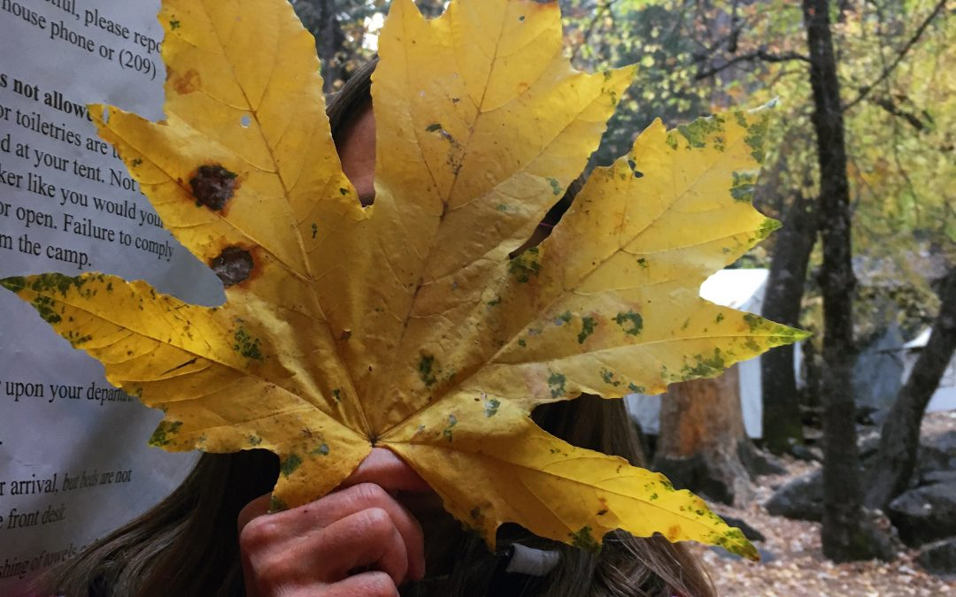 Big-Leaf Maple Head