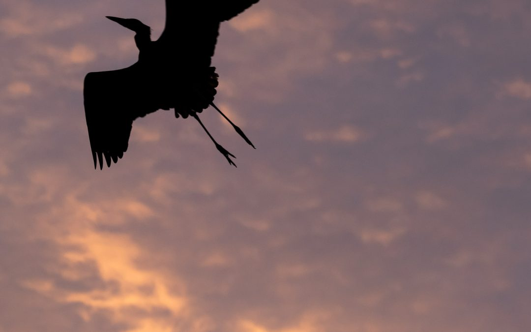 Fly away home!
