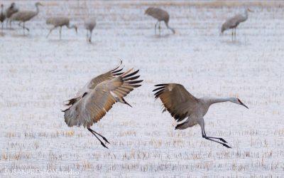 Landing Together