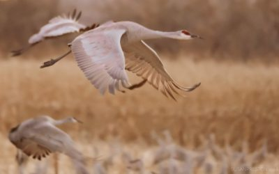 Soft Sandhill Takeoff