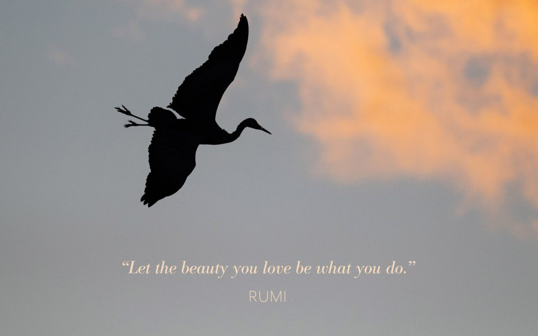Let the Beauty You Love…