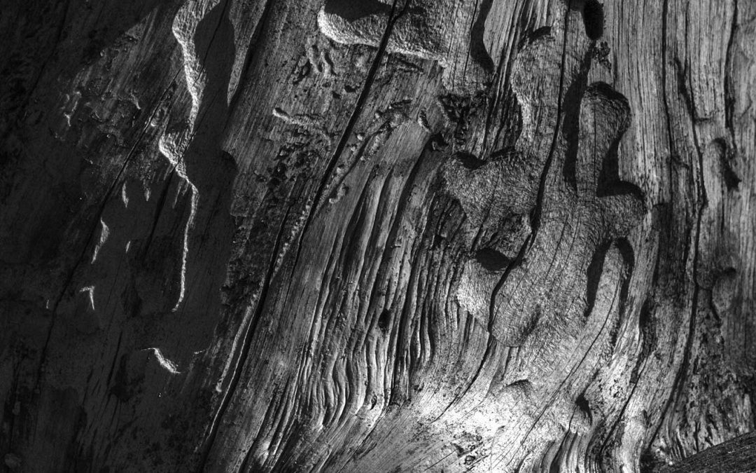 Cemetery Wood
