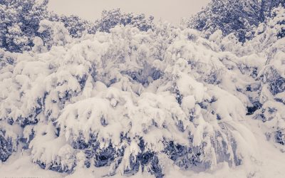 The Winter of Listening