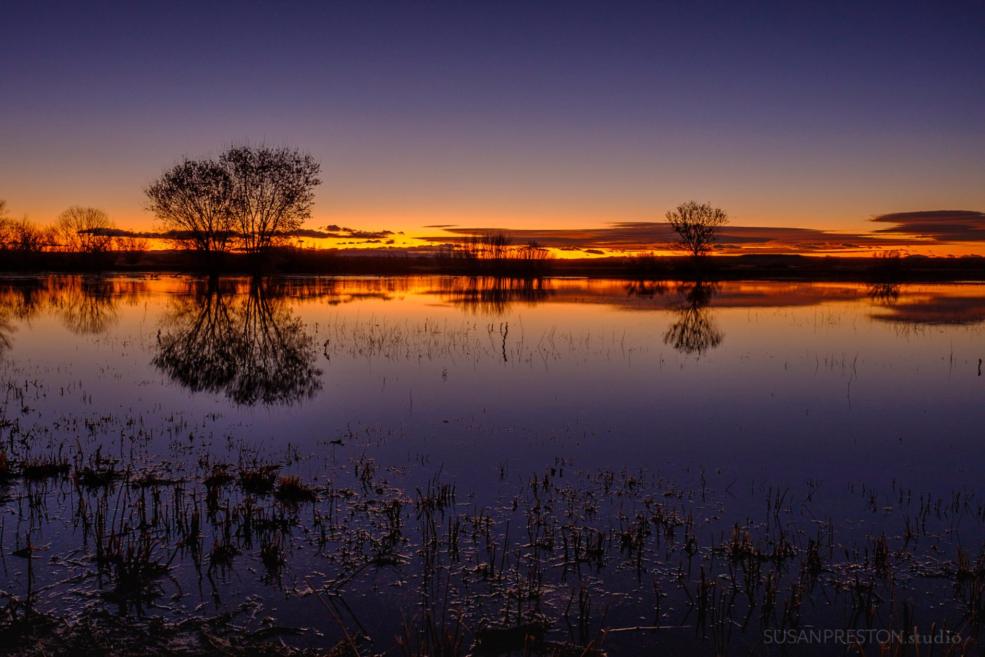 rich orange and purple hues linger in the sky during a sunrise in the bosque del apache