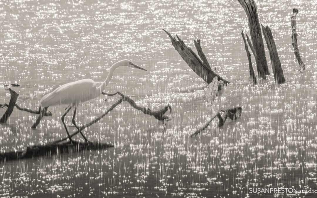 Egret as Illumination