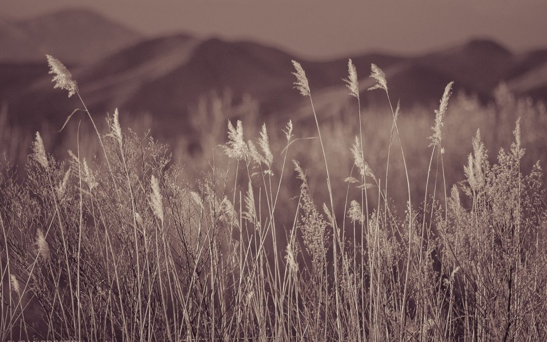 Apache Reeds and Love Made Visible
